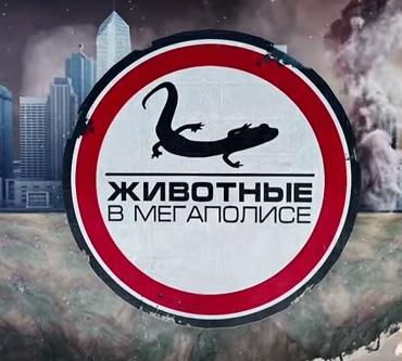 Новости сахалинская область видео